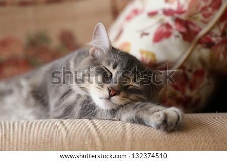 lovely cat sleeping on sofa - stock photo