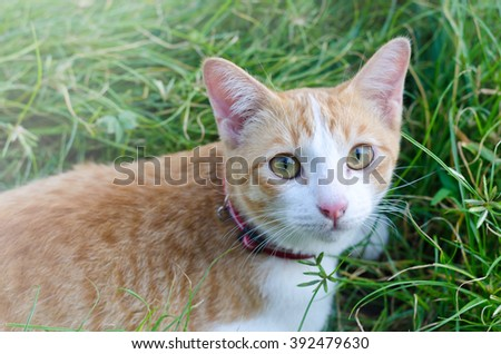 Lovely cat staying in a tall grass - stock photo