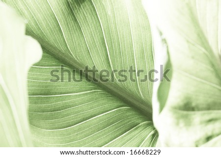 lovely close-up of a green leaf - stock photo