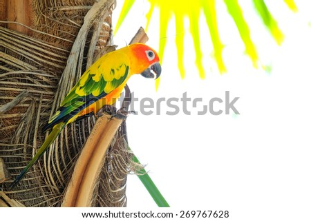 Lovely colorful Sun Conure parrot in the nature - stock photo