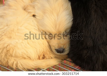 Lovely dog in sleeping, closeup of photo