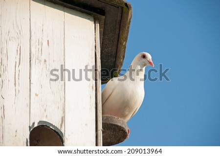 Lovely dove watching while sitting on its perch - stock photo