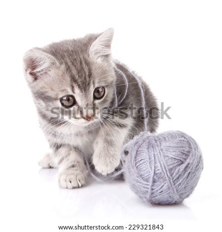 lovely gray kitten with gray ball sitting on white background