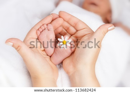 Lovely infant foot with little white daisy in mothers hands - stock photo