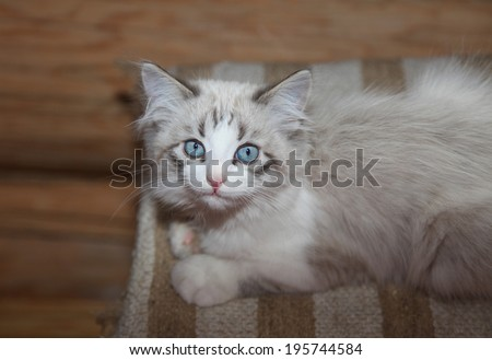 Lovely kitten close up  - stock photo