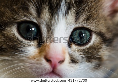 Lovely kitten looks faithfully up over white background close-up. Focus on an eyes - stock photo