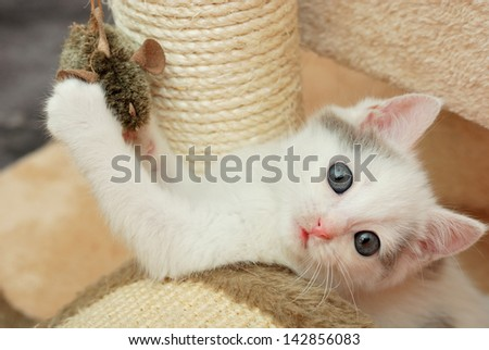 Lovely kitten playing with toy mouse