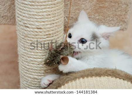 Lovely kitten playing with toy mouse - stock photo