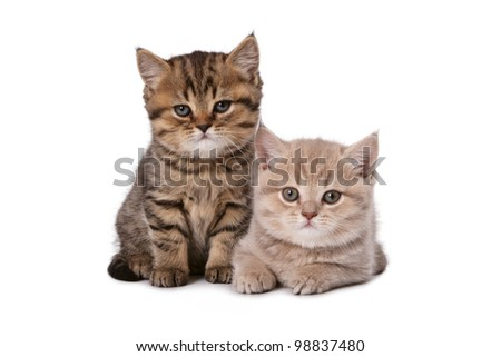 Lovely kittens look in the chamber posing