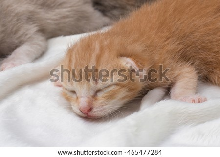 Lovely kittens newborn sleeping on white carpet