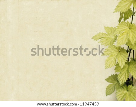 lovely light brown background image with interesting texture, close-up of leaves and plenty of space for text - stock photo