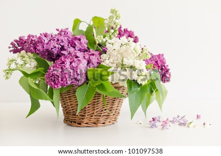 Lovely lilac in a basket - stock photo