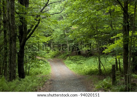 Lovely little gravel road through a bright green summer forest in Vermont. - stock photo