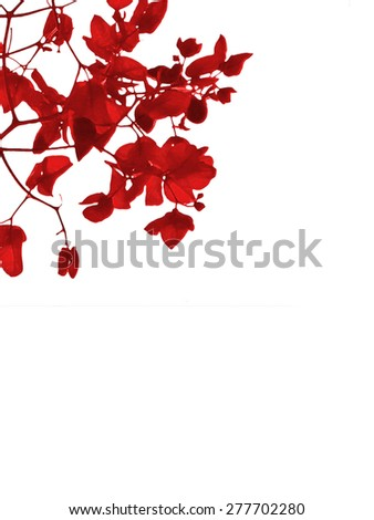 Lovely minimal style design of red petals flowers against white background.