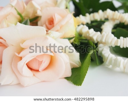 Lovely pale pink roses and blurred white shell necklace on white background / Closeup