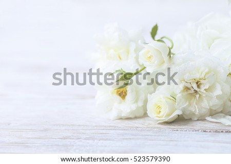 lovely roses on soft background.