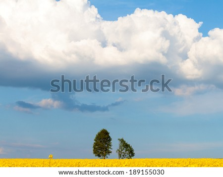 Lovely Scenery of Trees in a Canola Field in rural Franconia. Spring Countryside Idyll in Bavaria, Germany. Blue Sky and Yellow bottom. Green Leaves, - stock photo