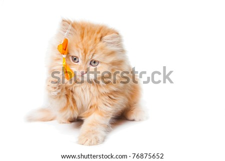 Lovely small red persian kitten playing with yellow bow sitting on isolated white background
