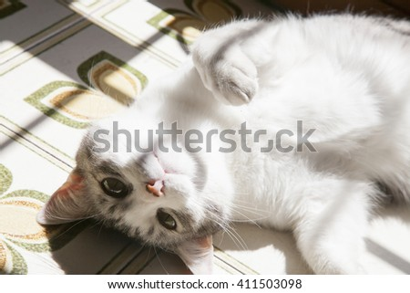 lovely spotted withe grey house-cat resting in the sun near a window - stock photo