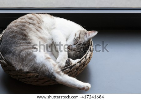 lovely stray cat adopted by a coffee shop, resting near a showcase - stock photo