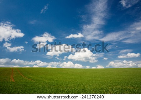 lovely summer field with blue sky - stock photo