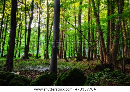 Lovely Summer Forrest. Sunset in the forest of bavaria. Woods of upper Franconia.