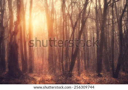Lovely sunset behind the forrest, detail - stock photo