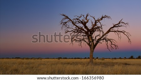 Lovely sunset in Kalahari with dead tree and bright colours - stock photo