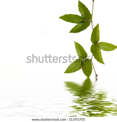 Lovely three shapes green leaf with reflection - stock photo