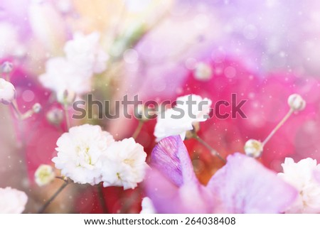 lovely white small flowers - stock photo