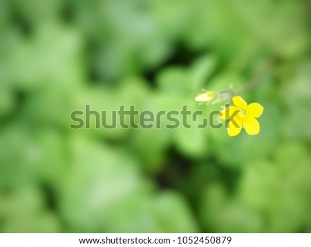 Lovely yellow clover flower oxalis stricta stock photo royalty free lovely yellow clover flower oxalis stricta on blurred green nature background with copy space mightylinksfo