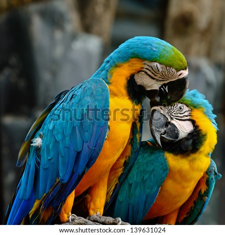 Lover of colorful Blue and Gold Macaw aviary, sitting on the log