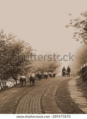 Lovers. Sepia-toned image of two young people walking hand in hand in the foggy morning on the road. A line of sheep passes by. - stock photo
