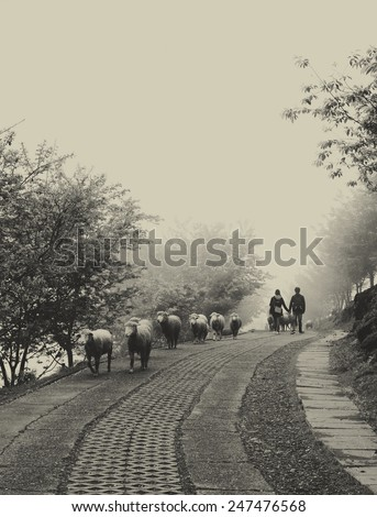 Lovers. Two young people walking hand in hand in the foggy morning on the road. A line of sheep passes by. - stock photo
