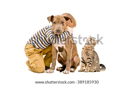 Loving boy, pit bull puppy and a cat, isolated on white background - stock photo