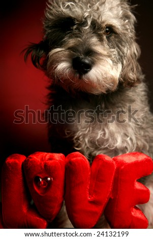 Loving dog expressing affection in front of LOVE sign