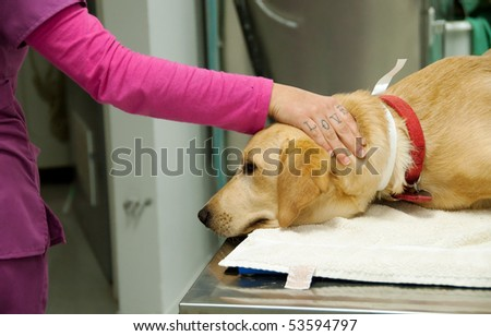 loving hand of a nurse - stock photo