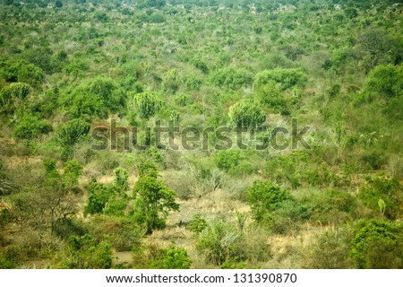low aerial shot of wilderness in south sudan - stock photo