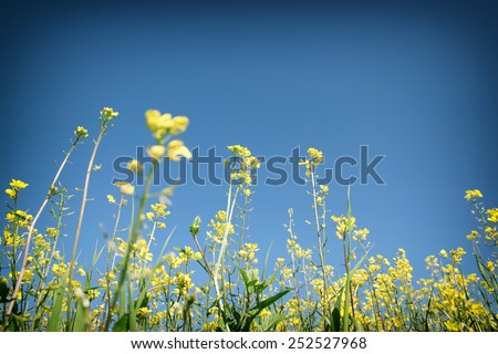 low angle photo of flowers against crisp blue sky . selective focus
