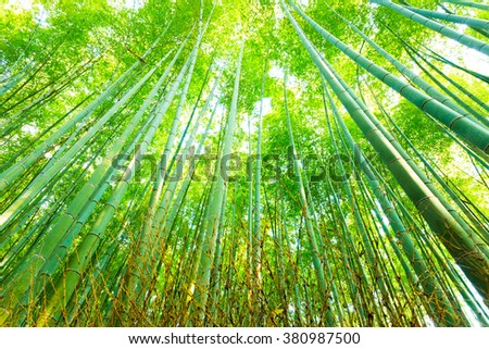 Low angle radial view looking up of tall green stalks at Arashiyama Bamboo Grove forest in Kyoto, Japan - stock photo