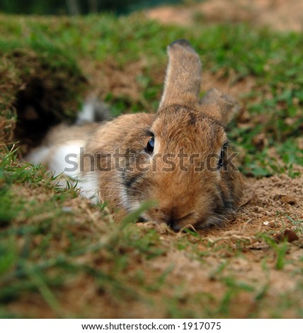 low angle shot of a rabbit resting on the ground - stock photo