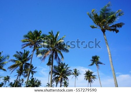 Low angle view of coconut tree with a beautiful blue sky background.