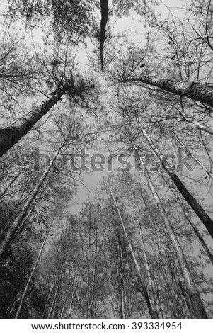low angle view of tree, black and white tone - stock photo