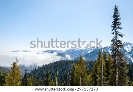 Low Cloud at Olympic National Park Overlook - stock photo