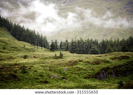 Low cloud over a pine forest in the Scottish Highlands, Scotland, UK  - stock photo