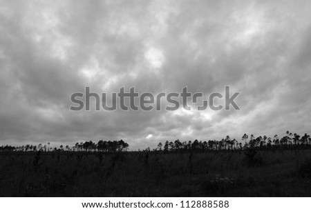 low clouds over field and forest - stock photo