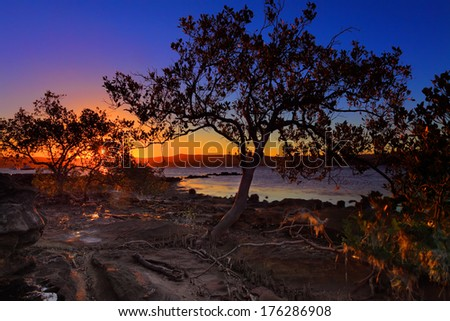 Low tide waters and intertidal shallows at Green Point, Central Coast of NSW.  At close up shows the mangroves distinctive peg roots, sticking up, which draw air into underground root system. - stock photo