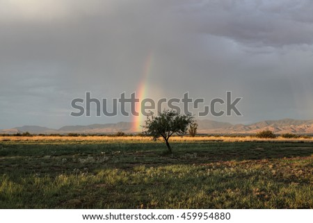 Low to ground piece of colorful rainbow arc behind lone little tree/Lower Part of Colorful Rainbow Arc on Ground Behind Isolated Small Tree/Rainbow colors behind little tree