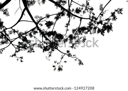 low viewpoint of branches with white background - stock photo