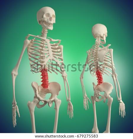 Lower Back Pain Lumbar Spine Anatomy Stock Illustration 679275583 ...